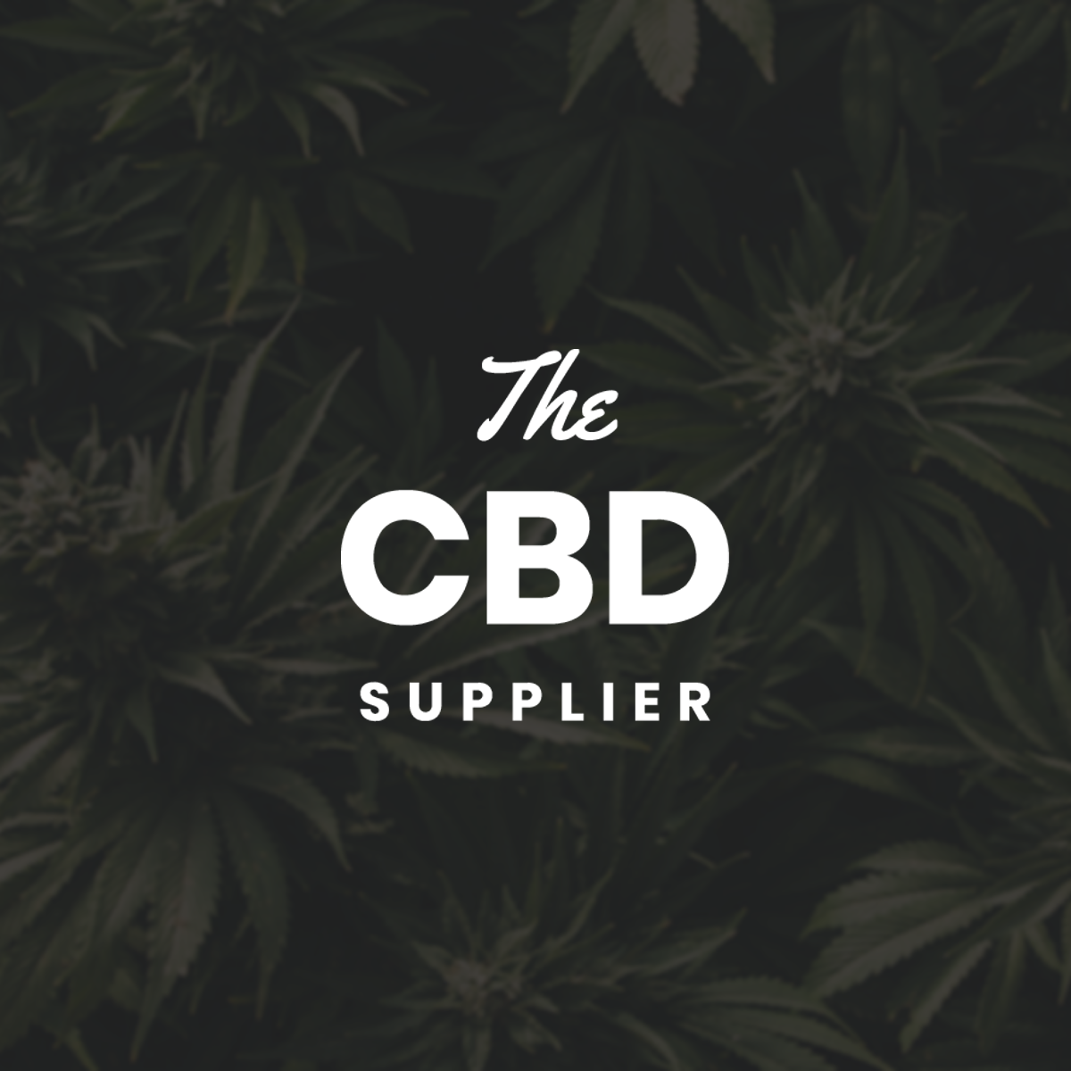 The CBD Supplier - wes cude
